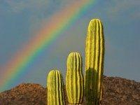 Rainbow in the Desert