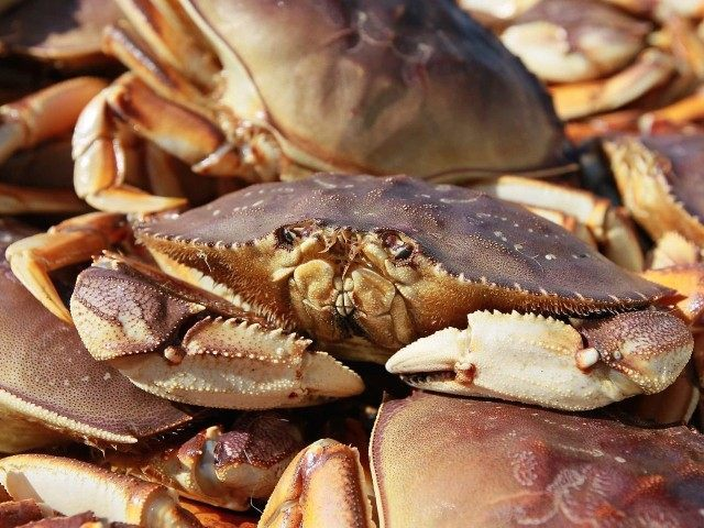 Dungeness Crab (Justin Sullivan / Getty)