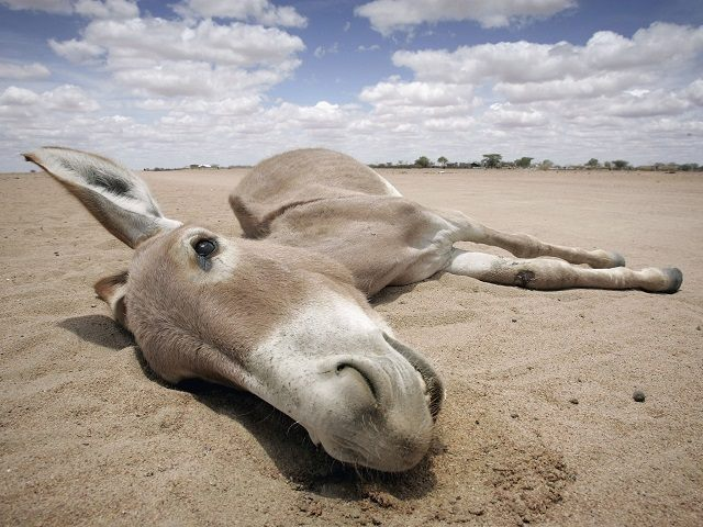 Drought Hit Kenya Heading For Humanitarian Crisis