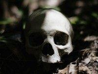 California Man Finds Human Skull in His Front Yard