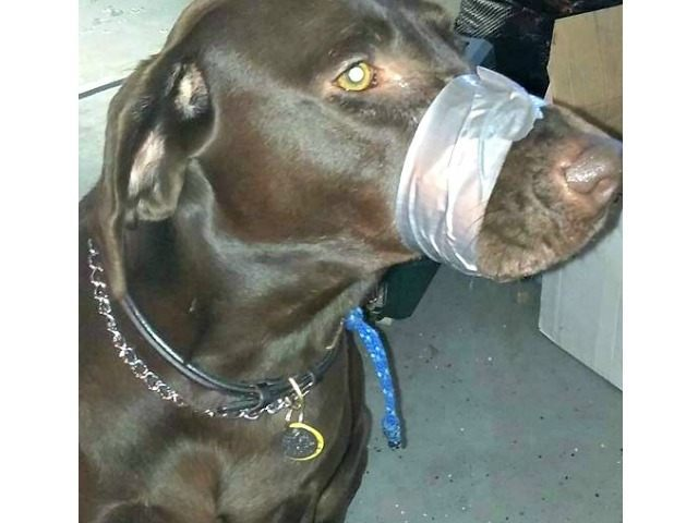 Muzzled Dog Facebook Katie Brown