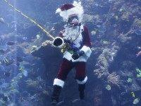 Santa Claus Coral Reef (Eric Risberg / Associated Press)