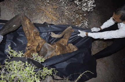 Coahuila Cops Collect Body