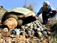 Syrians Drop Cluster Bombs on Civilians Mohammed Zaatar AP