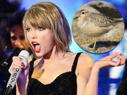 Taylor-Swift-Bird-Getty