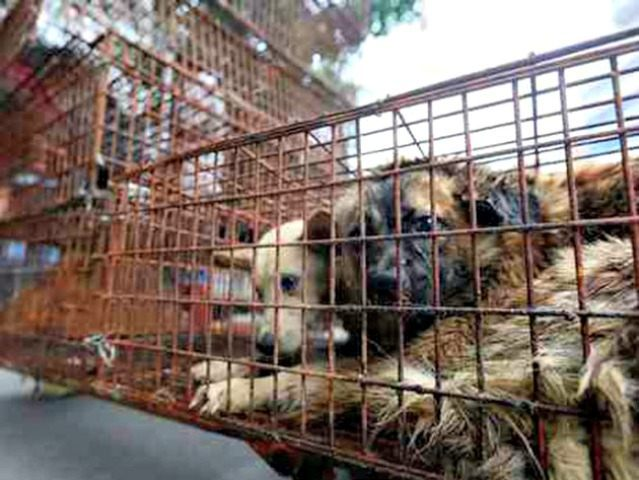 animal cruelty APHumane Society International