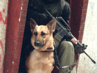 IDF dog with Israeli soldier