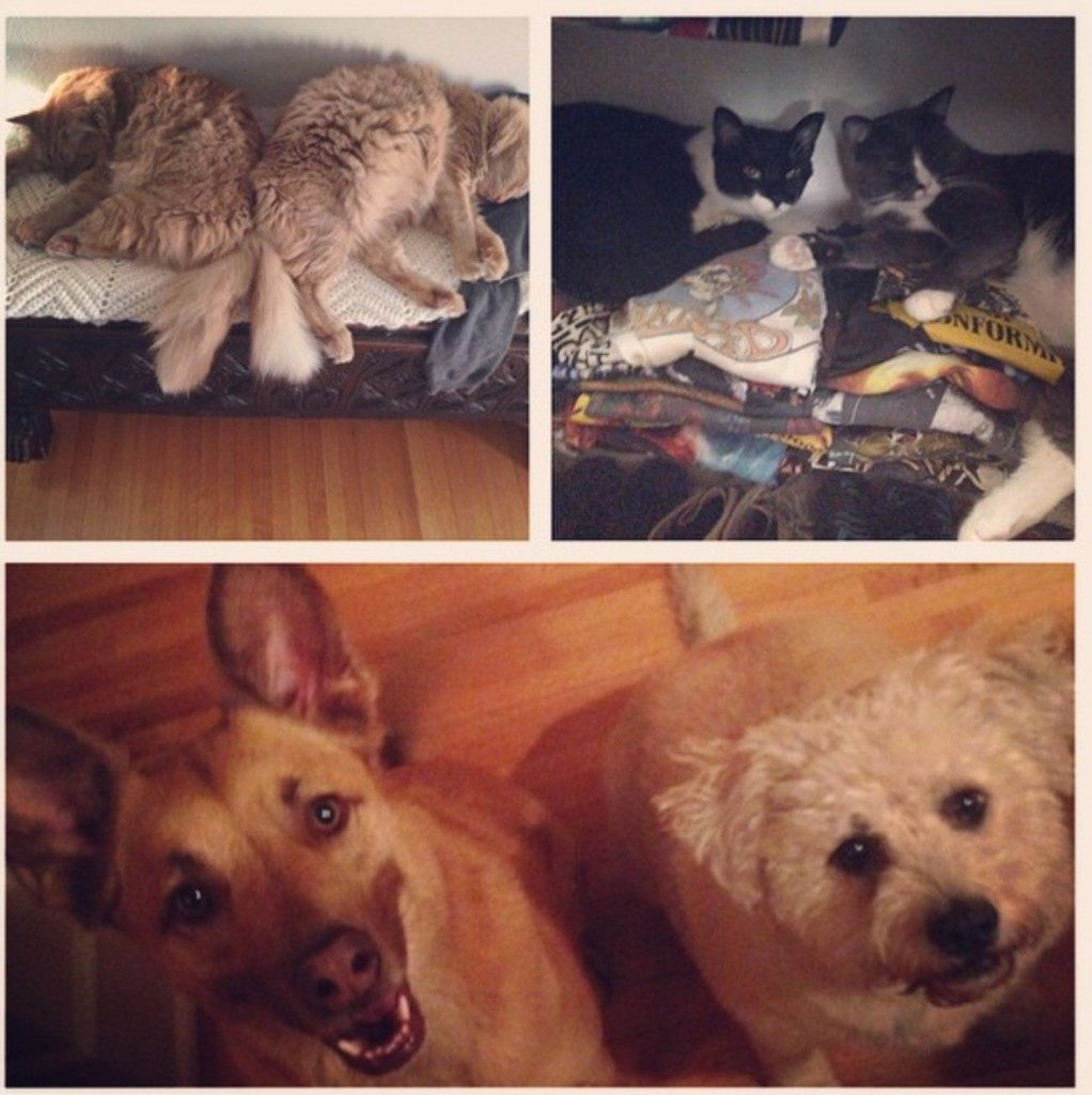 A photo of some of the couple's pets, posted to Moore's Instagram account.