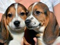 test-tube-puppies-AP