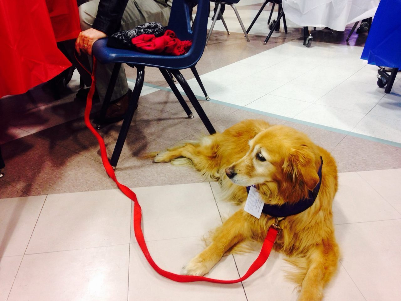 Honey Bear the golden retriever , 11, was also present to caucus for Trump