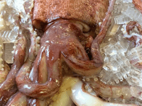 Huge squid (HSU marine lab / Facebook)