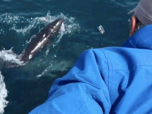 Baby dolphin (Screenshot / YouTube / Dolphin Safari)