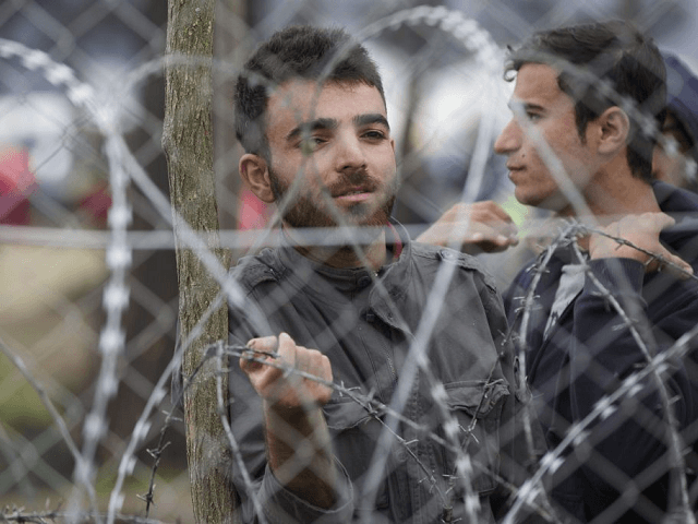 Migrant Background Checks