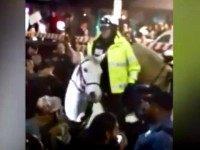 Police Horse News 3