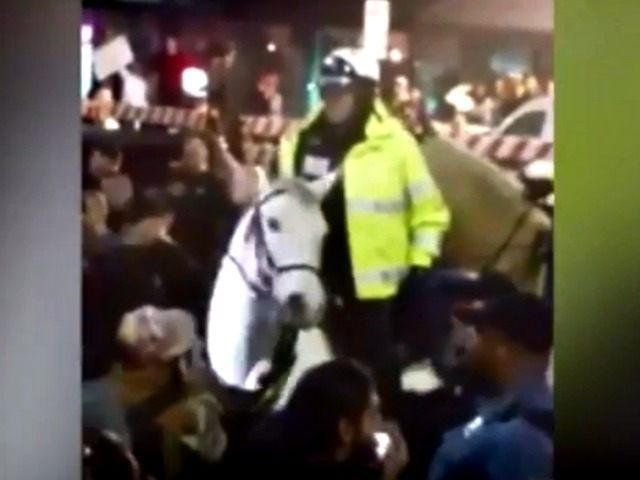 Police Horse News 3