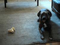 Dash the dog (Facebook)