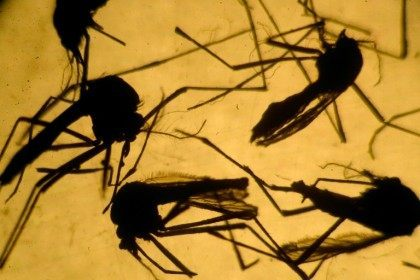 Scientists in Brazil say the increase in microcephaly is linked to an explosion of the mosquito-transmitted Zika virus, with an estimated 1.5 million people infected
