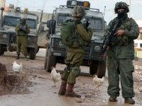 Chickens walk next to Israeli soldiers during clashes with Palestinian protestors in the village of Qabatiya, near the West Bank town of Jenin on February 22, 2016