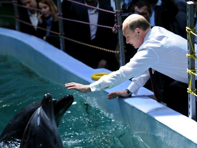 Russia's President Vladimir Putin (C) reaches to touch a dolphin on September 1, 2013 during his visit in oceanarium on Russky (Russian) island near the eastern city of Vladivostok. Putin is on a three-day visit to the Russian Far East. AFP PHOTO/RIA-NOVOSTI/POOL/ALEXEI NIKOLSKY (Photo credit should read ALEXEI NIKOLSKY/AFP/Getty Images)