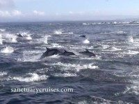 Dolphins flee (Screenshot / Sanctuary Cruises / YouTube)