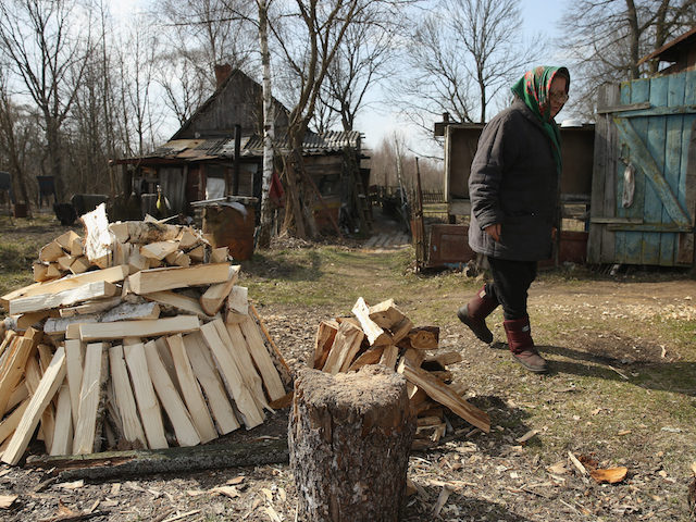 BARTOLOMEYEVKA, BELARUS - APRIL 06: Lyuba Galushka, 70, walks past chopped firewood to the shed behind her house on April 6, 2016 in Bartolomeyevka, Belarus. Lyuba is one of four residents still living in Bartolomeyevka, a former village located in southeastern Belarus that in 1986, following the nuclear meltdown of reactor number four at the Chernobyl nuclear power plant located approximately 170km to the south, was contaminated with radioactive fallout. Authorities concentrated their initial evacuation efforts on communities closer to Chernobyl, but by the early 1990s determined Bartolomeyevka and other nearby villages were not safe, evacuated the residents, raized nearly all the structures and buried the ruins. Today the site remains an exclusion zone and off-limits to visitors, though Lyuba and the few others were eventually permitted to stay. Hundreds of villages in Belarus met a similar fate in the decades after Chernobyl and today approximately 20% of the country remains contaminated to varying degree with fallout including radioactive caesium, strontium and plutonium. (Photo by Sean Gallup/Getty Images)