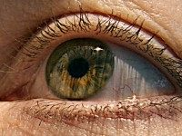 US scientists have identified two genes responsible for macular degeneration, the gradual deterioration of eyesight in the elderly that can lead to blindness, a study showed this week.