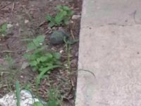Mexican Cartel Throws Grenade near Kindergarten Class South of Texas