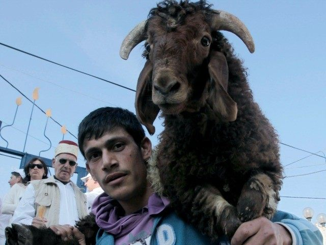 A Samaritan carys a goat slaughter during the traditional Passover sacrifice ceremony at Mount Gerizim near the northern West Bank city of Nablus on April 23, 2013.