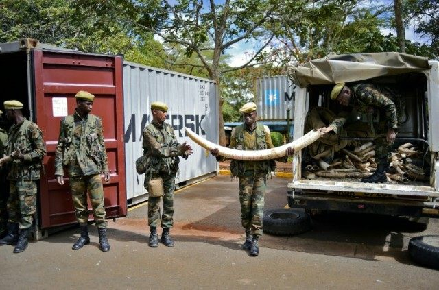 Soldiers move confiscated ivory to secure containers at the Kenya Wildlife Services (KWS) headquarters in Nairobi, on April 15, 2016