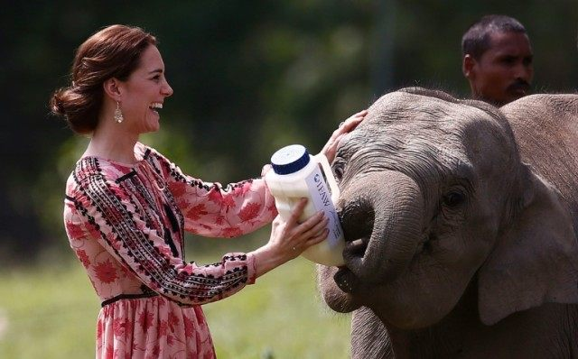 Britain's Catherine, Duchess of Cambridge, feeds a baby elephant at the Centre for Wildlife Rehabilitation and Conservation (CWRC) at Panbari reserve forest in Kaziranga, India on April 13, 2016