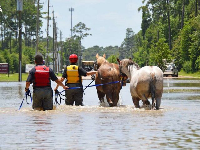 Horses Rescued - Houston SPCA
