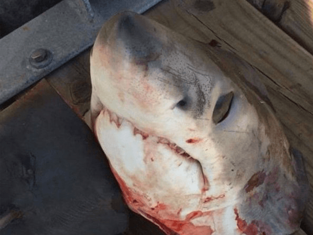 Shark head (Ryan Logan / Twitter)