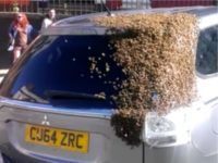 Bees Follow Car for Two Days to Rescue Queen