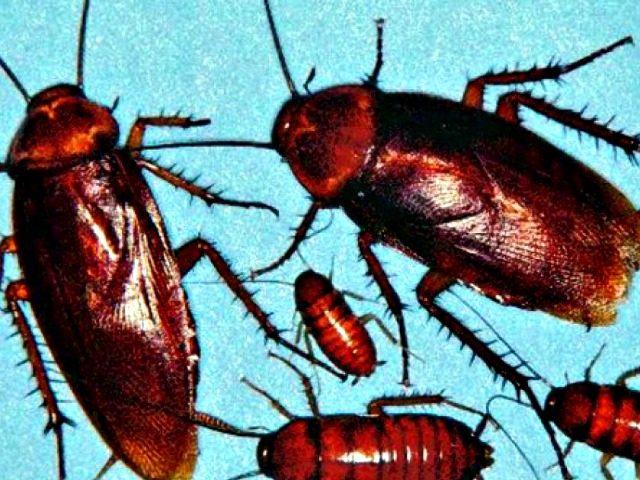roaches-escape AP