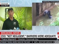 Cincinnati Zoo Director: The Gorilla Was 'Clearly Agitated' and 'Clearly Disoriented'