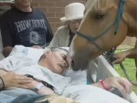 Dying Paralyzed Veteran Granted Final Wish of Seeing Horses
