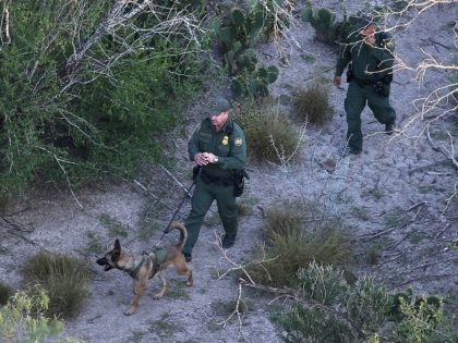 MISSION, TX - DECEMBER 09: A U.S. Border Patrol K-9 team searches for undocumented immigrants near the U.S.-Mexico border on December 9, 2015 near Mission, Texas. The number of migrant families and unaccompanied minors from Central America crossing into the U.S. has again surged in recent months. (Photo by John …