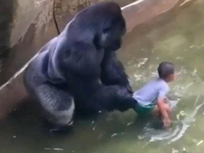 Harambe-Gorilla-YouTube