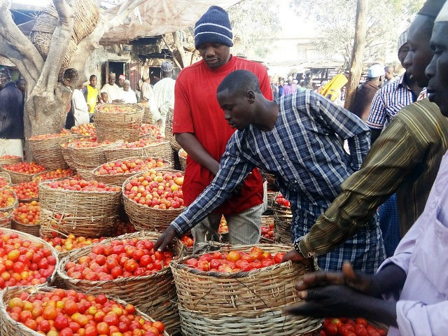 NIGERIA, Kano : A trader sorts a basket of tomatoes at the Yankaba vegetables market in northern Nigerian city of Kano, on January 15, 2016. It's a situation that mirrors the giant oil industry, where Nigeria has abundant resources but relies on imports. But this is about tomatoes, and Africa's richest man Aliko Dangote is hoping to change production with a giant factory that will boost domestic output, create jobs -- and even, indirectly, fight Boko Haram. / AFP