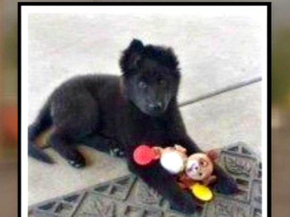 puppy 1379720_1280x720