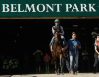 Jockey Kent Desormeaux rides Exaggerator onto the track for a training session ahead of the 148th running of the Belmont Stakes, at Belmont Park in Elmont, New York, on June 6, 2016
