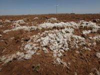 Uncertainty Surrounds Texas Cotton Farmers on Capitol Hill