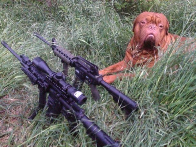 Guns and dog (Corey Gwathney / Facebook)