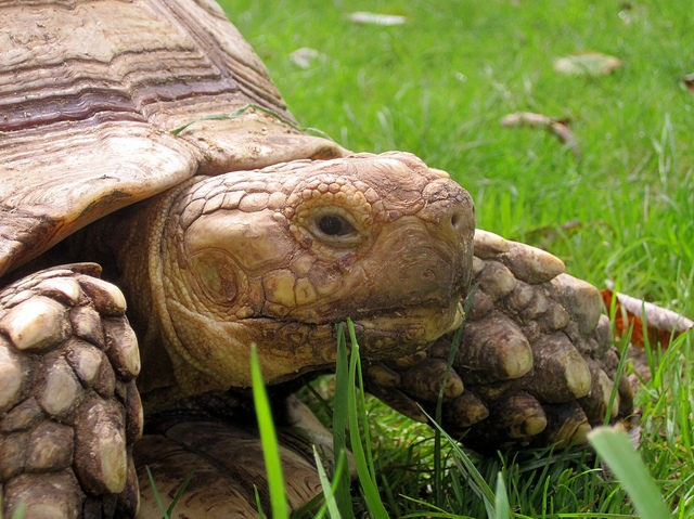 Tortoise (Matthew Britton / Flickr / CC)
