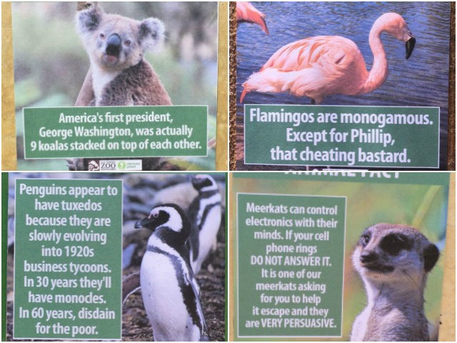 Comedian Leaves Hilarious 'Animal Facts' Placards at L.A. Zoo