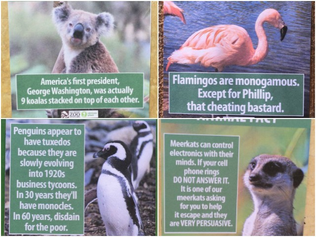 Funny Fake Names: Comedian Hangs Up Hilarious 'Animal Facts' At L.A. Zoo