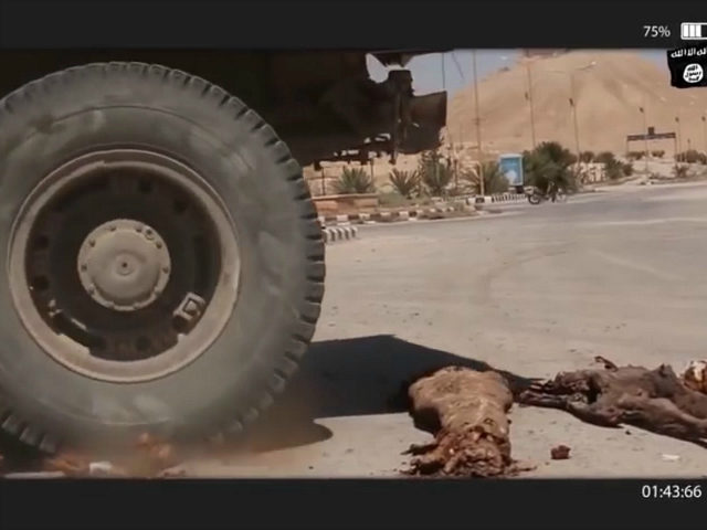 Palmyra: Video Surfaces of Islamic State Running over Mummies with Truck