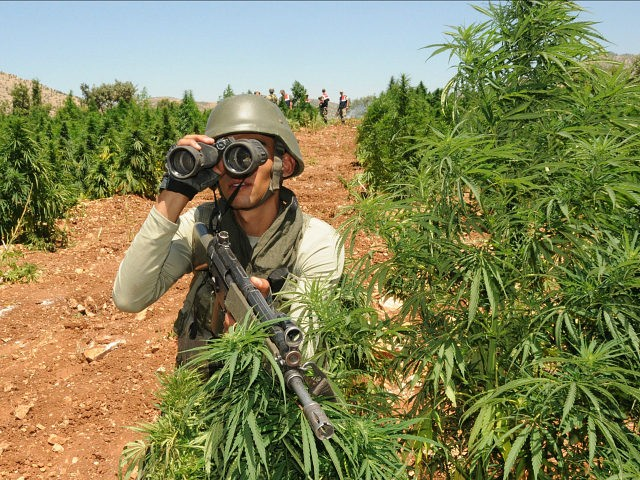 TURKEY, Diyarbakir : Turkish soldiers take position in a marijuana field during an operation on July 8, 2013 in the Lice district of the southeastern city of Diyarbakir. AFP PHOTO /MEHMET ENGIN