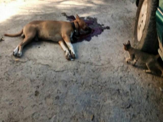 murdered dog