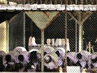 radicialzation in prison (Gitmo)